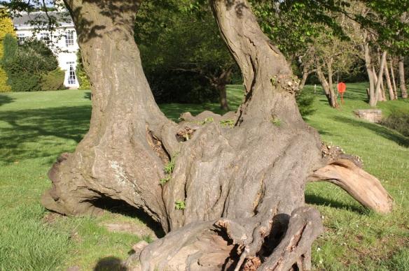 Eastwood Hall tree
